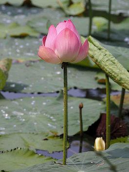 Lotus Craig copy.jpg