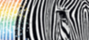 NEG153_Zebras.jpg