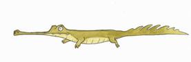 Snappy Crocodile