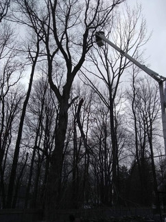 Hickory and A& J Tree Services 477-0157