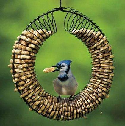 oiseaux, nourriture oiseaux, mangeoires oiseaux