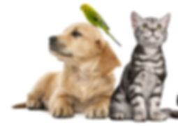 nourriture animaux, chiens, chat, hamster
