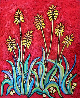 Aloe Vera in Red