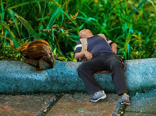街上的睡眠者 Street Sleeper #1