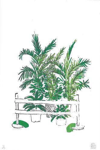 Urban Plants: study #1