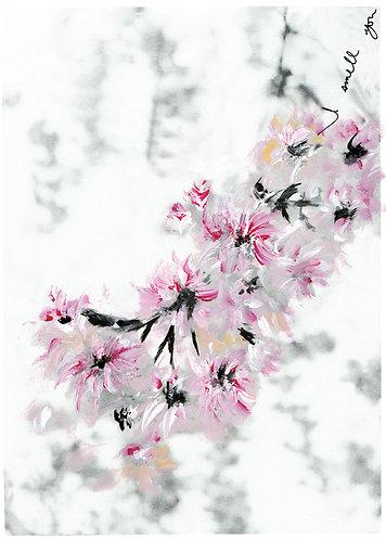 Sakura VI