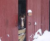 Jingels in Snow.jpg