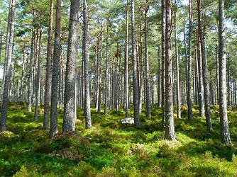 forest-272595_1920.jpg