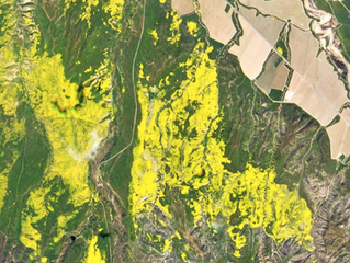 Wildflower 'super bloom' seen from space