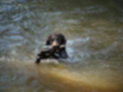 Gauge_river_duck.JPG