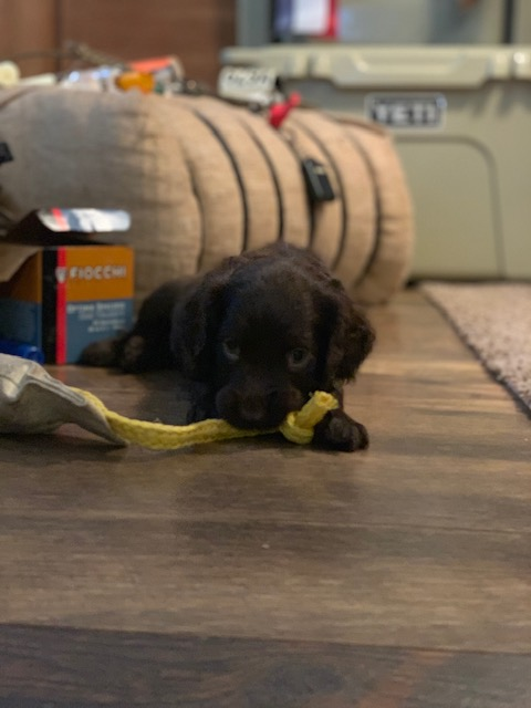 pup with dummy.jpg
