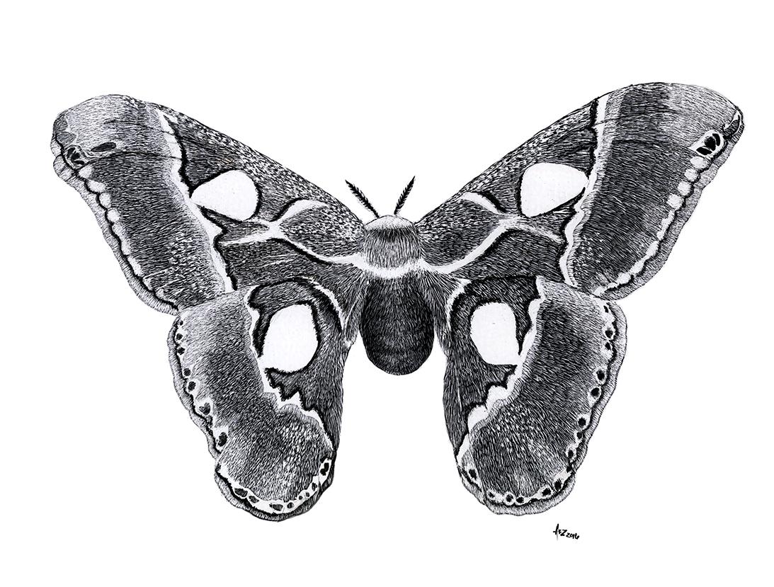 Cynthia Moth_AZimmerman