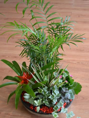 cristal plantas.JPG