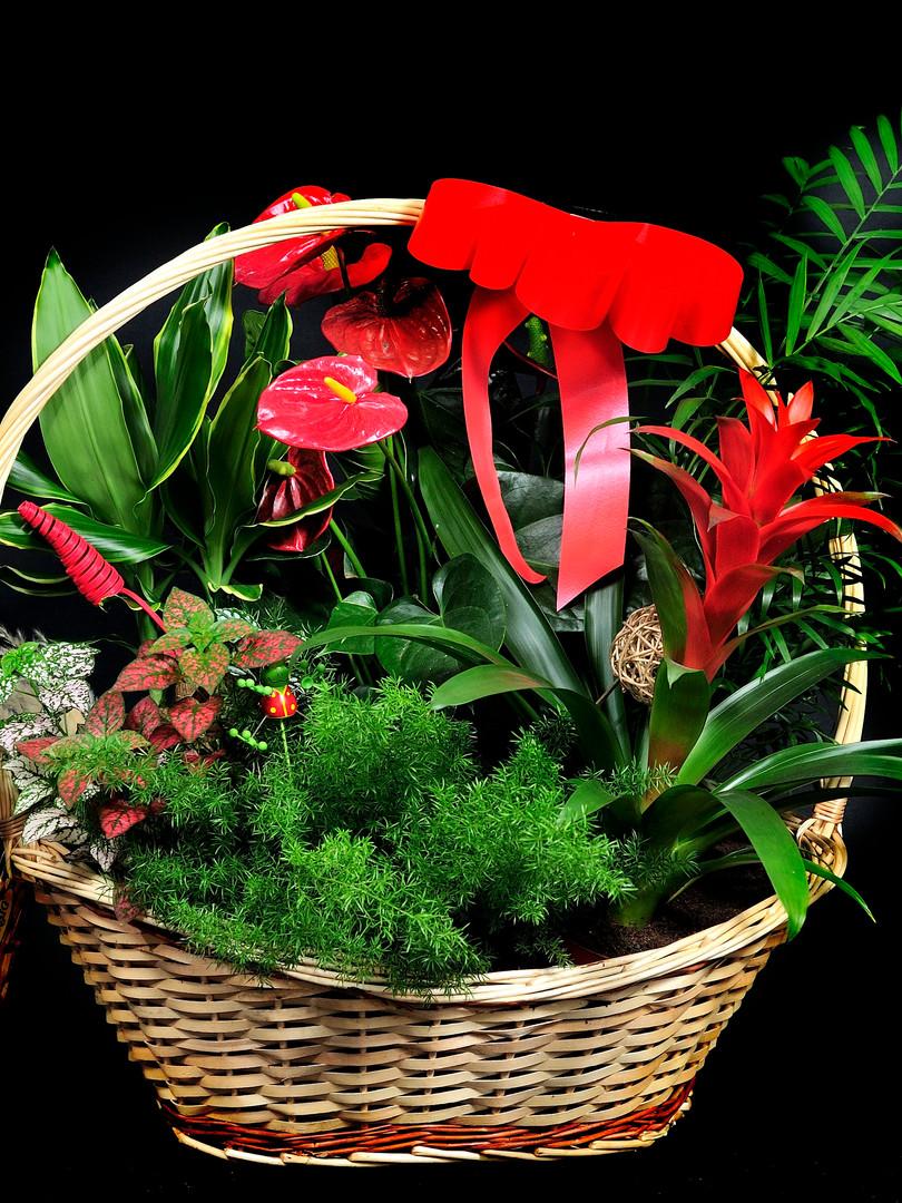 cesta mimbre plantas grd.JPG