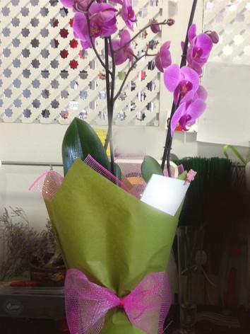 orquidea morada.JPG
