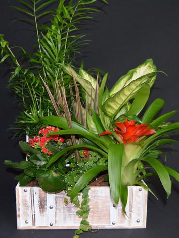 baul plantas grd.JPG