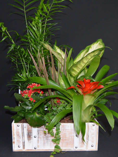 Composiciones de plantas