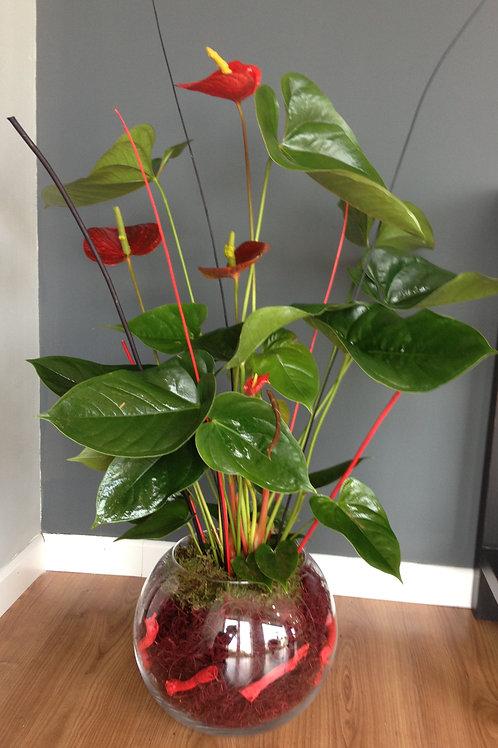 Planta o plantas en cristal