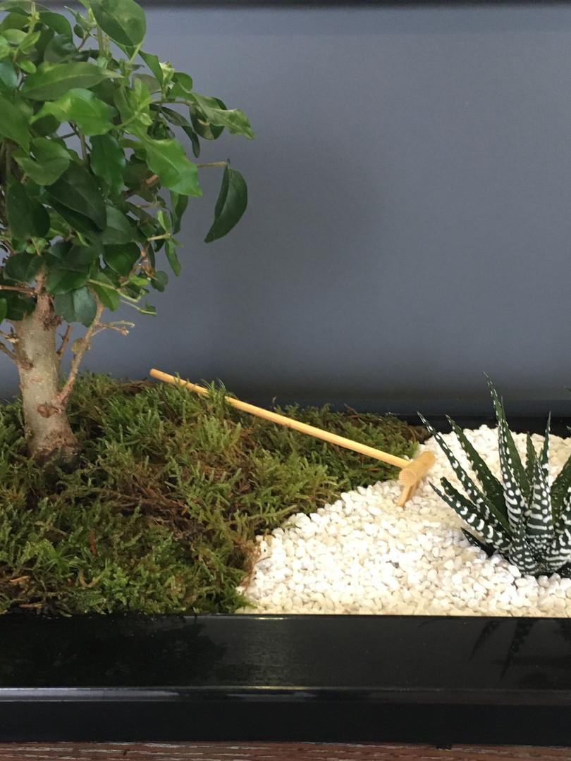 jardin zen.JPG