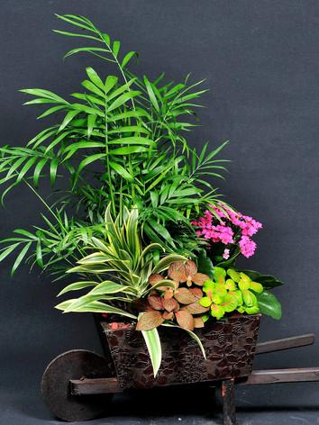 carretillas plantas.JPG