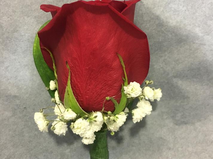 prendido rosa roja paniculata.JPG