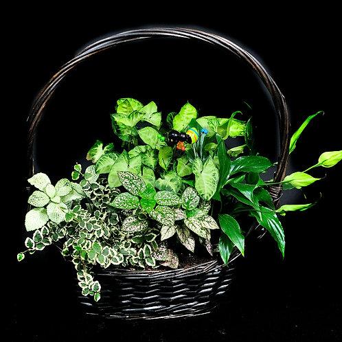 Cesto de plantas