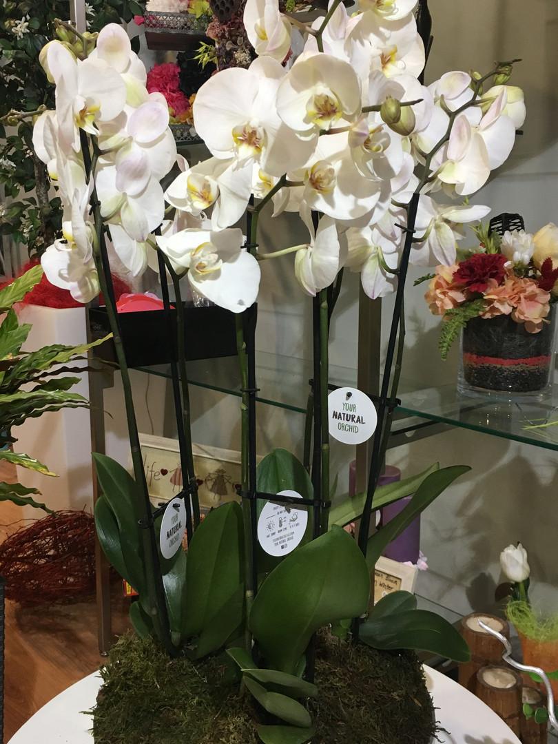 Centro orquideas cristal.JPG