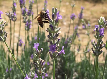 The Buzz on Bees!
