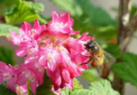 Wildbienen.jpg