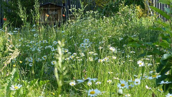 Naturschutz_Wildblumenwiese.jpg
