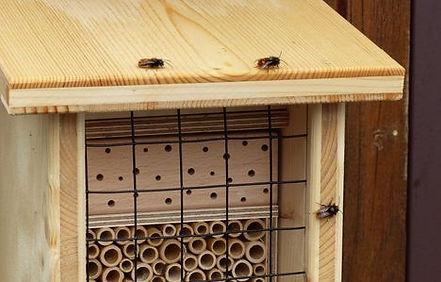 BeeFriend_12.jpg