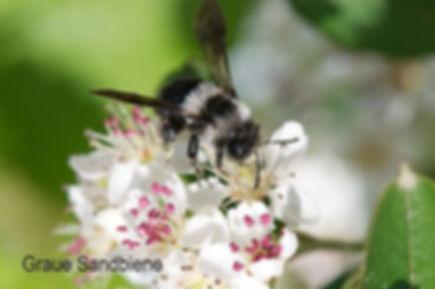 Wildbienen_3.jpg