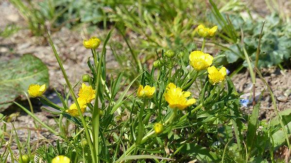 Naturschutz_Spezielle_Pflanzen.jpg