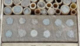 BeeFriend_10.jpg
