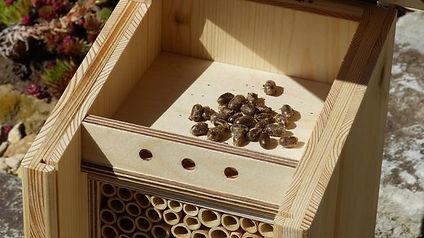 BeeFriend_4.jpg
