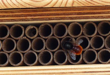 Wildbienen_Fortpflanzung_Suche.jpg