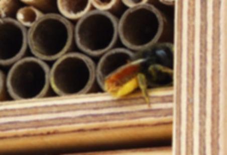Wildbienen_4.jpg