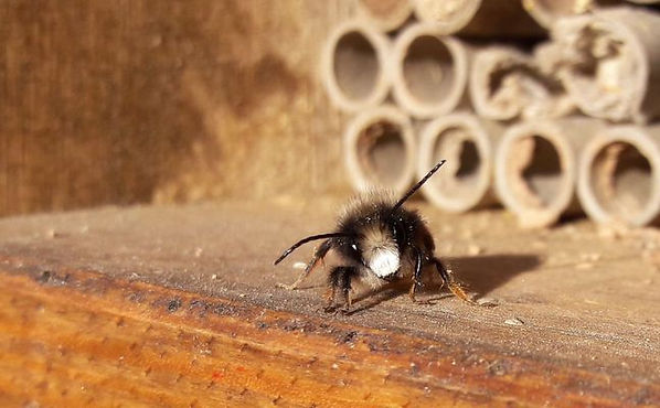 BeeFriend_15.jpg