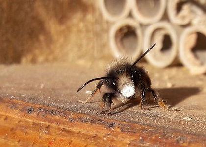 BeeFriend_Mini_9.jpg