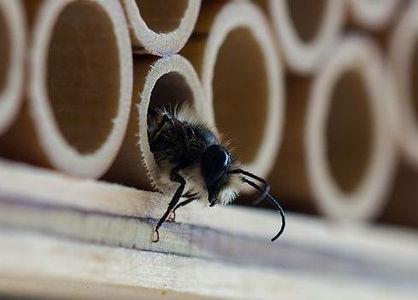 BeeFriend_Mini_8.jpg