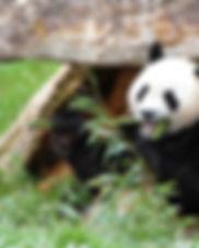 Region-zoo-beauval-tours-ih-3.jpg