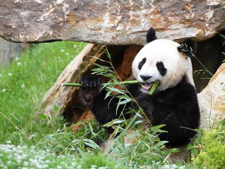 Découvrez les magnifiques Zoo de la région !