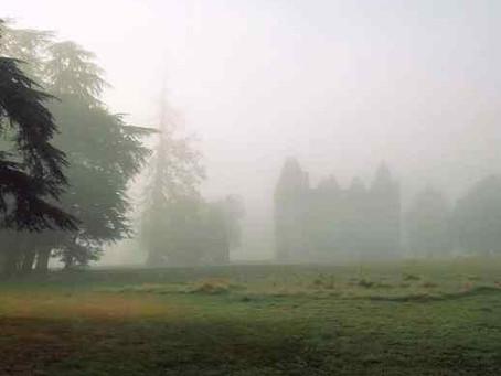 Luz y niebla de verano en el campo