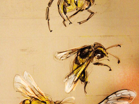 Insects Sketches