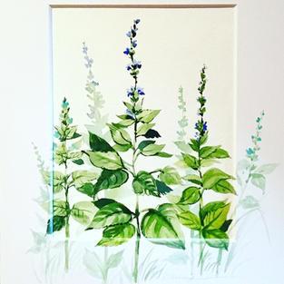 A Plant