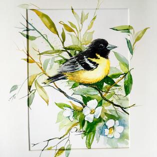 Spring. Bird