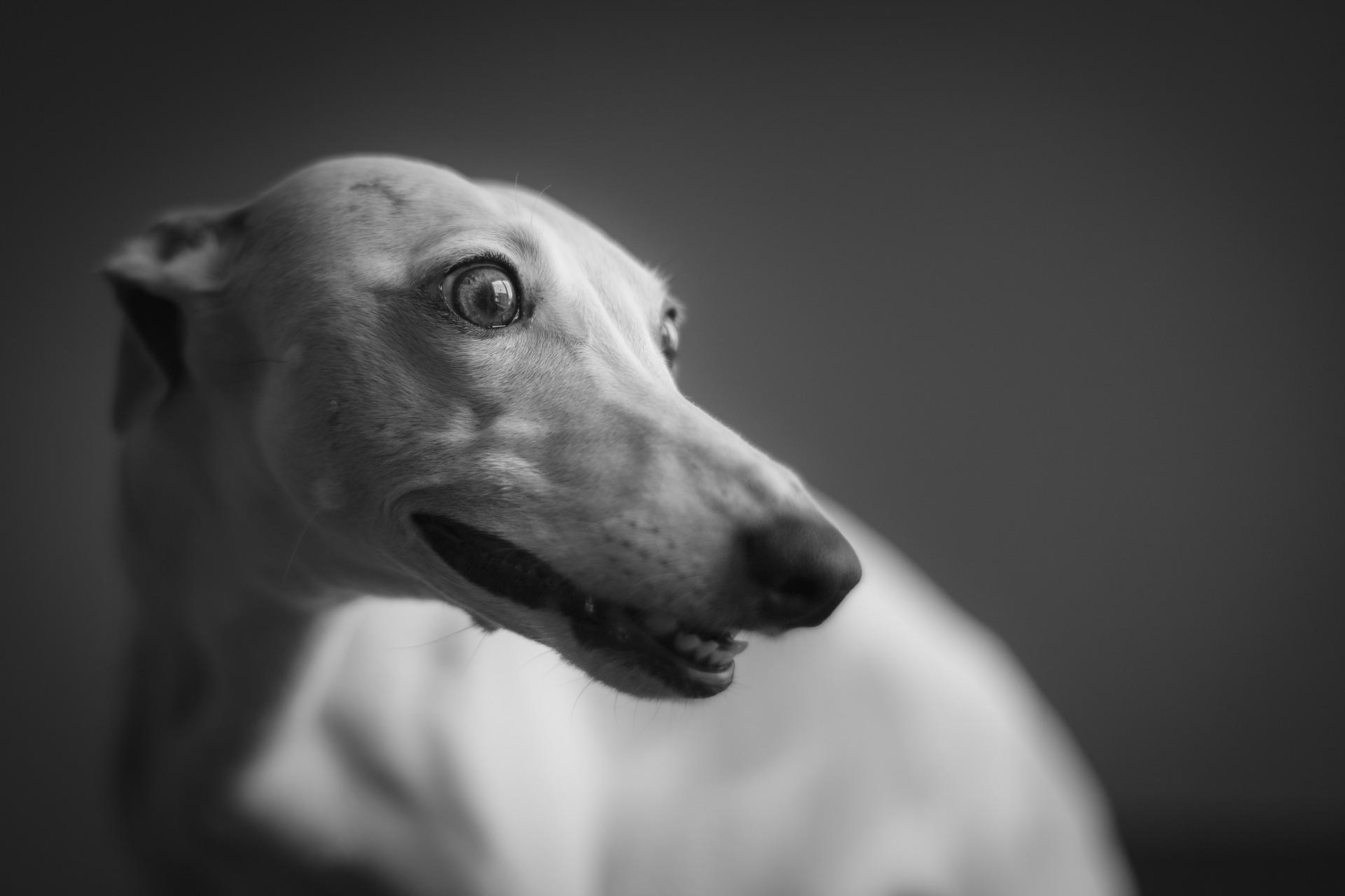 dog-4030566_1920