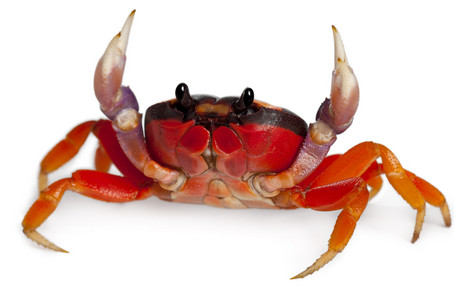 Crab Style by DuCanto