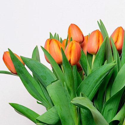 British tulips - Charade