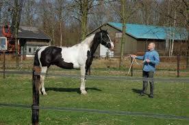bont paard en man bemmelmans